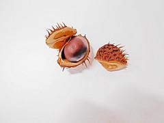 ripe chestnut (msergeevna) Tags: nut nature nikon