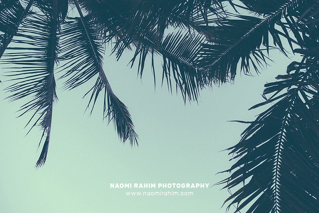 The World's Best Photos of palmtrees and vsco - Flickr Hive Mind