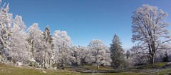 Hard To Focus On The Trail (29in.CH) Tags: fall autumn fatbike ride 18112018 frozen trees blue sky
