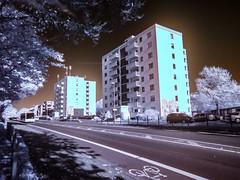 Infrared II (betadecay2000) Tags: ir infrarot infrared dülmen germany duitsland deutschland niemcy himmel sky rasen lawn trees bäume baum tree landschaft landscape park gras landstrase bedeckt