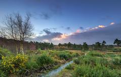 Lions Hill (nicklucas2) Tags: landscape cloud moon heath heather gorse tree sunrise