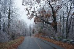 Glass Alley (oldoinyo) Tags: trees ice glazing freezingrain icestorm northcarolina