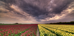 And now the clouds are mad. (Alex-de-Haas) Tags: 11mm adobe blackstone d850 dutch hdr holland irix irix11mm irixblackstone lightroom nederland nederlands netherlands nikon nikond850 noordholland photomatix photomatixpro beautiful beauty bloem bloemen bloementeelt bloemenvelden cloud clouds cloudscape drama dramatic floriculture flower flowerfields flowers landscape landschaft landschap lente lucht mooi nature natuur polder skies sky skyscape spectaculair spectacular spring sun sundown sunset tulip tulips tulp tulpen wolk wolken zonsondergang