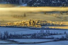 Pulvermoos (Robbi Metz) Tags: deutschland germany bayern bavaria altherrenweg unterammergau landscape fog trees sunrise pulvermoos colors canoneos