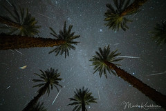 2018 Geminid Rain in the Desert (Marsha Kirschbaum) Tags: california deathvalleynationalpark sonyarii landscape furnacecreek ©marshakirschbaum 2018geminidmeteorshower stars lookingup palmtrees starrynight