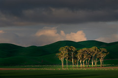 Trees and Green Hills (Jos Buurmans) Tags: centralhawkesbay clouds evening field goldenhour green hawkesbay hills landscape nature newzealand northisland otane pukehou sheep sky smallgroupoftrees trees nz