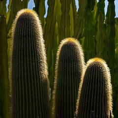 A little bit prickly (uwe1904) Tags: herbst landschaft mallorca pentaxk1 spanien urlaub uwerudowitz balearen fornalutx es pflanzen plants gegenlicht sonne grün