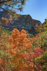 McKittrick Canyon (Squirrel Girl cbk) Tags: 2018 gumo guadalupemountainsnationalpark mckittrickcanyon november texas autumnleaves limestone colorful