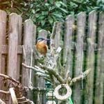 Seltener Besuch in unserem Garten. thumbnail