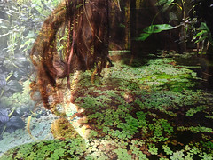 Dreaming (Renate R) Tags: dreaming water floating waterplants portrait wasserpflanzen wasser porträt selfie selfportrait netartii renate