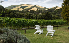 Waratah Hills vineyard South Gippsland (laurie.g.w) Tags: waratah hills winery south gippsland victoria australia eosm canon southgippsland outdoors vineyard trees vines chairs setting promcountry