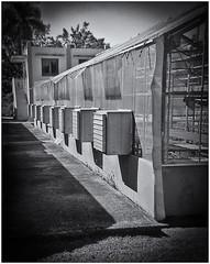 Lomography (Black and White Fine Art) Tags: lomography lomo holga holga120s kodaktmax400 expired2008 film pelicula 120film estacionexperimental riopiedras jardinbotanico botanicalgarden bn bw toycamera camaradejuguete plasticcamera camaraplastica niksilverefexpro2 lightroom3