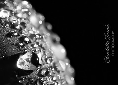 Condensation on a grape #macro (charlottejarvis@live.co.uk) Tags: uk condensation grape macro