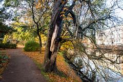 Garden (Trädgårdsföreningen) (Maria Eklind) Tags: garden autumn gothenburg göteborg trädgårdsföreningen sweden flower höst city västragötalandslän sverige se