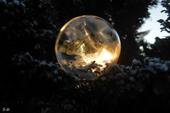 Soap Bubbles (S.Garten) Tags: thebeautyofnature magicmoments i love nature magic world cold freezing perfect moment crystal water ice macro like feather winter wonder fairy tale soap bubbles frozen air palace snow gold green blue sky trees seifenblasen therightmoment art kindofmagic