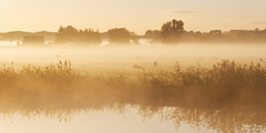 A Misty Autumn Morning (Johan Konz) Tags: misty morning mist fog landscape tree water reed grass grassland sky outdoor animal sheep nikon d7500 purmerend netherlands