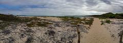 Camino a una playa perfecta (dcdc887) Tags: ecuador galapagos isla island playa beach path trek camino sendero trail arena sand tropical paraiso paradise mangrove manglar naturaleza nature aventura adventure paisaje landscape