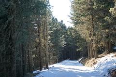 Plose (Luciana.Luciana) Tags: bressanone brixen sudtirol altoadige neve montagna boschi