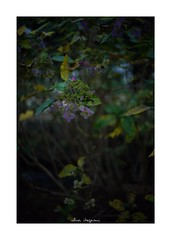 2018/12/2 - 12/12 END. photo by shin ikegami. - SONY ILCE‑7M2 / Voigtlander NOKTON CLASSIC 40mm f1.4 SC VM (shin ikegami) Tags: macro マクロ flower 花 井の頭公園 吉祥寺 winter 冬 sony ilce7m2 sonyilce7m2 s7ii 40mm voigtlander nokton nokton40mmf14sc tokyo photo photographer 単焦点 iso800 ndfilter light shadow 自然 nature 玉ボケ bokeh depthoffield naturephotography art photography japan earth asia
