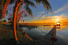 Bending Tree at Sunset, Lake Ariana, Auburndale, Florida (gg1electrice60) Tags: fisheyelens bendingtree creative sunset auburndale lakeariana polkcounty florida fl unitedstates usa us america earth palmtree fronds dock clouds acrossfom1230arianaboulevard acrossfrom1230arianablvd privateproperty