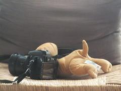 DSCF0836 (Benoit Vellieux) Tags: photographer nikon camera singlelensreflex slr teddybear oursenpeluche nounours teddybär teddy stilllife naturemorte stillleben