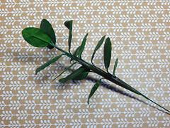 Pflanzentutorial - plants tutorial (Levitation_inc.) Tags: ooak doll dollhouse plant plants display diorama prop handmade paper tutorial how diy miniature