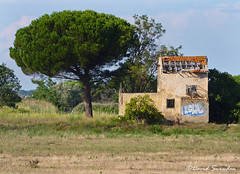Life's What You Make It (Dave Snowdon (Wipeout Dave)) Tags: davidsnowdonphotography landscape canoneos1100d france occitanie hérault sérignan abandoned tree building graffiti derelict