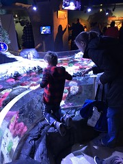 "2018-03-24-to-30-minnesotta-to-see-adam-and-sara-curl-with-family-at-aquarium-5_31076100288_o • <a style=""font-size:0.8em;"" href=""http://www.flickr.com/photos/109120354@N07/31279611447/"" target=""_blank"">View on Flickr</a>"