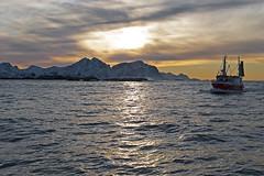 Au-delà du cercle polaire, 2012 / Beyond the polar circle, 2012 (Joseff_K) Tags: nikon nikond80 d80 audeladucerclepolaire beyondthepolarcircle tamron1750mmf28 norvege norway norge noreg kongeriketnoreg kongerketnorge mer sea montagne mountain coast neige snow merdenorvege norwegiansea boat bateau