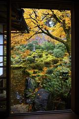 Late autumn in Shuheki-en Garden (DanÅke Carlsson) Tags: japan japanese shuhekien garden sanzenin ohara kyoto temple autumn fall yellow traditional buddhism