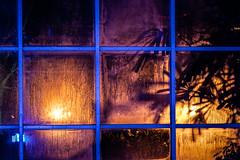 Winterlichter Palmengarten 2019 (janeway1973) Tags: winterlichter palmengarten lights color art lichter lichtkunst kunst night nacht dark darkness dunkel dunkelheit farbenfroh farbig bunt kunstwerke artsy contrast licht kontrast deutschland hessen germany frankfurt mainhattan greenhouse gewächshaus