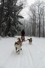 IMG_0033_AutoColor (LifeIsForEnjoying) Tags: snow mushing dog sledding dogs kaskae sitka nike