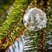 Frozen soap bubble at -9 degrees, St Paul Minnesota