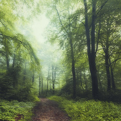 scent of summer (Dyrk.Wyst) Tags: buchenwald germany landschaft mann natur stimmung wald beechtrees fog forest haze hiker landscape leaves light male mist mood morgens morning mystical nature summer sunrise photoshelter shrubs atmosphere backlight colourful conceptual creativephotography dreamy fineart impressionistic peaceful painterly square texture