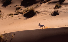 _Q4I7783-Edit (buddy4344) Tags: helicopter namibia aerial oryx sanddune