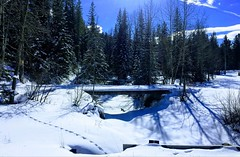 Bragg Creek Alberta Canada (Mr. Happy Face - Peace :)) Tags: braggcreek snow fencefriday art2019 forest trails trees weather sky cloud sun