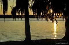 _MG_7071-Edit (Scott Sanford Photography) Tags: 6d canon cypress eos lake naturalbeauty naturallight nature outdoor reflection sunlight texas topazlabs water beautiful swamp trees ef24105mmf4lisusm martindiesjrstatepark
