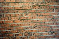 Brick wall (Matthew Paul Argall) Tags: canonsnappy20 fixedfocus 35mmfilm kodakultramax400 kodak400 ultramax 400isofilm brick brickwall