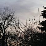 P2240118 thumbnail