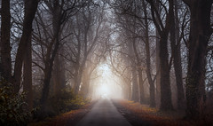All is Illuminated, as Darkness descends (John Joslin) Tags: forest trees wood lights car dusk twilight winter autumn road bare illuminated shadows england branches dark evening fog foggy landscape nature natural night outdoors outside loxia250