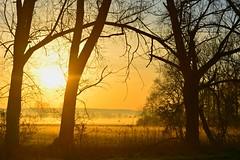 In the light (Tobi_2008) Tags: sonnenaufgang sunrise bäume trees himmel sky landschaft landscape sachsen saxony deutschland germany allemagne germania