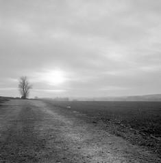 Chemin vers une année paisible (PATRICK skorzec) Tags: arbres argentique chemin ciel noiretblanc paysage photo