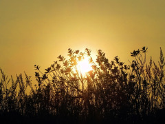 Dancing in the Sunset! (Abeer!) Tags: abeer abeerbarman landscape bengal dusk dark field fall green grass golden india leaves nature orange sky scenery sunset sunlight tree trees valley vale westbengal yellow sun sunflare bhutanghat