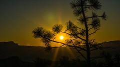 Sunset at Bryce Canyon NP (kuhnjulian094) Tags: anfänger beginner greatview view beautiful awesome amazing great sunsetpoint amerika america usa utah sonya6000 sonyalpha6000 sony sigma sonnenstern sun sonne baum trees tree bäume nationalpark np brycecanyon canyon bryce brycecanyonnp sonnenuntergang sunset