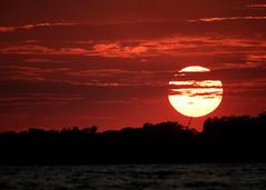 Lake Erie sunset (Iain Leach) Tags: birdphotography wildlifephotography photograph image wildlife nature iainhleach wwwiainleachphotographycom canon canoncameras photography canon1dxmk2 canon5dmk4 beauty beautiful beautyinnature macro macrophotography closeup lakeeriesunset