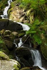 Filet d'eau (Vosges / Haut-Rhin, France)