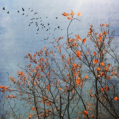 Autumn (jeanne.marie.) Tags: sky flight flying brown orange blue thedaybeforethanksgiving iphoneography iphone7plus mydailywalk words story textured leaves branches tree silhouettes birds autumn