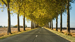 Le plafond de feuilles (BL : : photos) Tags: platane colors autumn road france light canoneos30d canonefs1785mmf456isusm