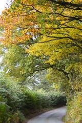 Autumn (Seventh Heaven Photography **) Tags: autumn nikon d3200 colours leaves trees minsterley shrewsbury shropshire arch road yellow orange