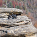 Fat black vultures await their next meal at Lover's Leap